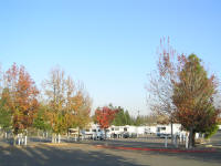 Parts of this glorified parking lot actually looked pretty nice with some fall colors.